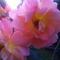 Thumb_jardin-al_ao_t2011_1321