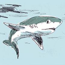 Normal_requin200x200-1504274762