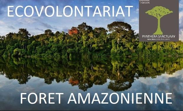 Visuel du projet Ecovolontariat dans la forêt amazonienne