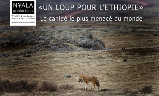 "Project visual ""Un loup pour l'Ethiopie"""