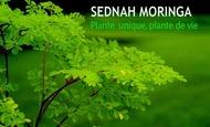 Widget_plante_copie-1516995904