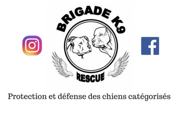 """Visuel du projet Un coup de patte pour les chiens de la """"BRIGADE K9 RESCUE"""""""