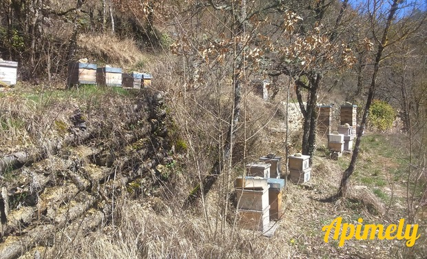 Project visual APIMELY, notre installation en apiculture