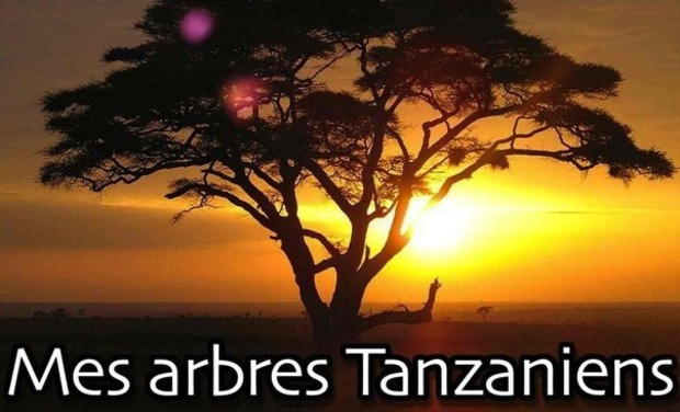 Visueel van project Tanzanian trees