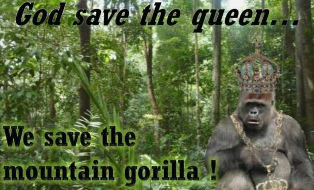 Project visual God save the queen, We save the mountain Gorilla