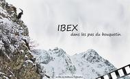 Widget_ibex-1522402494