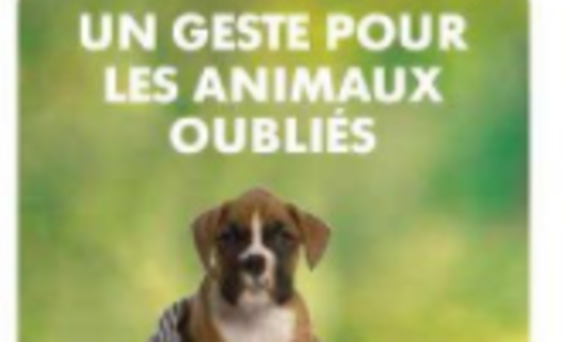Project visual Refuge pour animaux