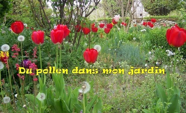 Visuel du projet Du pollen dans mon jardin