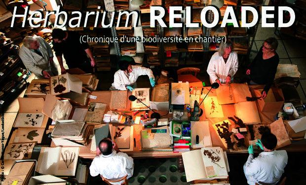 Project visual Herbarium Reloaded