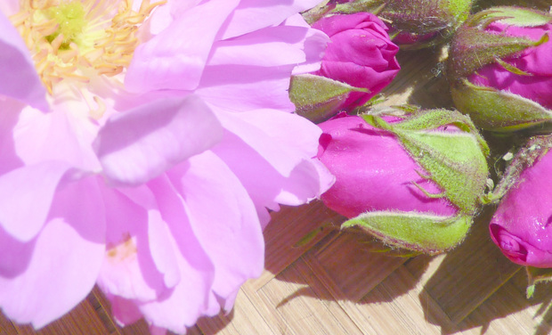 Visuel du projet Achat d'un distillateur pour pétales de roses