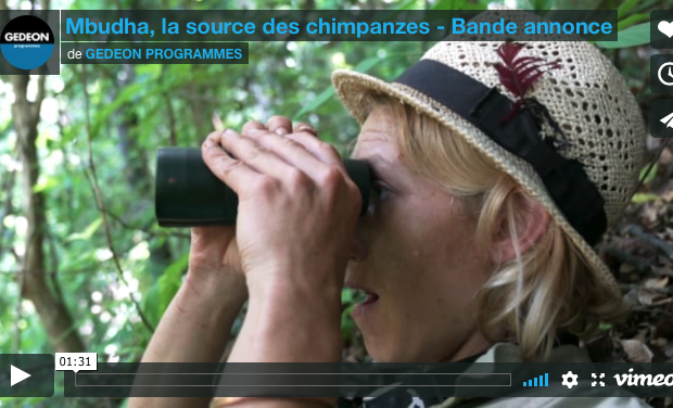 Project visual Mbudha, in the chimpanzees' footsteps - the film