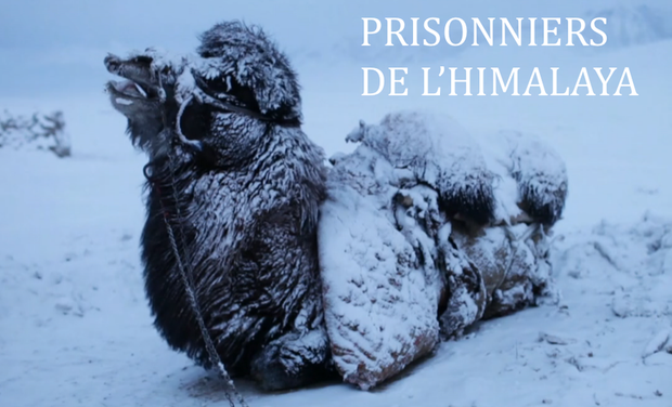 Project visual Prisonniers de l'Himalaya