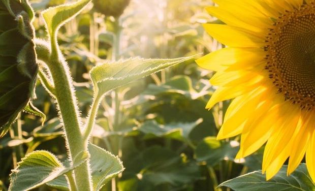Visueel van project Koklaya La Beauté et la Santé par les plantes. Partageons l'amour de la nature