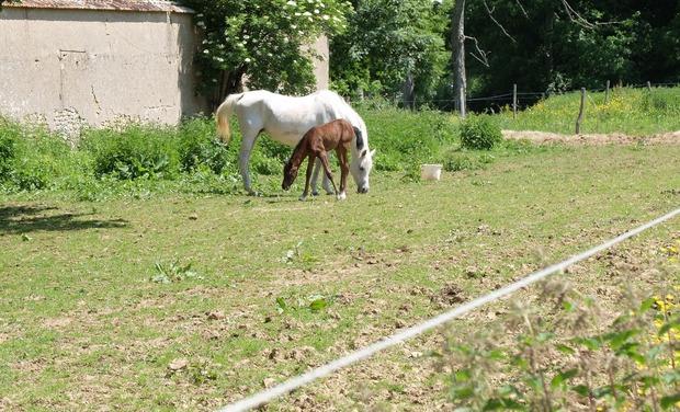 Visuel du projet Les cavaliers de Chanteloup ont besoin de votre aide !
