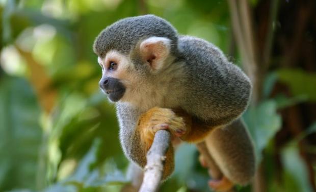 Visuel du projet Soutenez mon projet d'éco-volontariat en Amérique du Sud !
