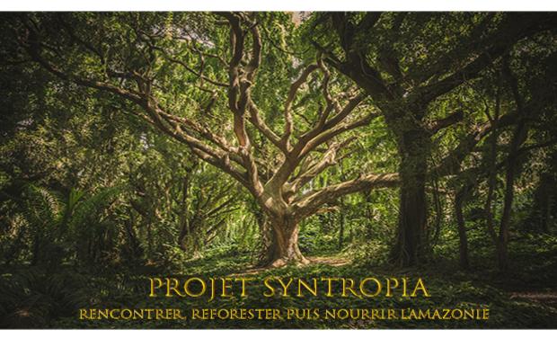 Visuel du projet Projet Syntropia : Rencontrer, Reforester puis Nourrir l'Amazonie.