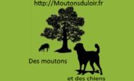 Widget_logo-1530173716
