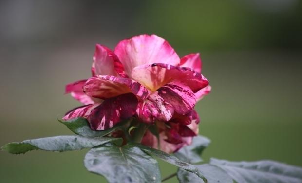 Visuel du projet Méli Mélo de fleurs