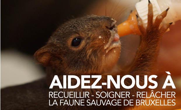 Visuel du projet Du matériel médical pour la faune sauvage de Bruxelles