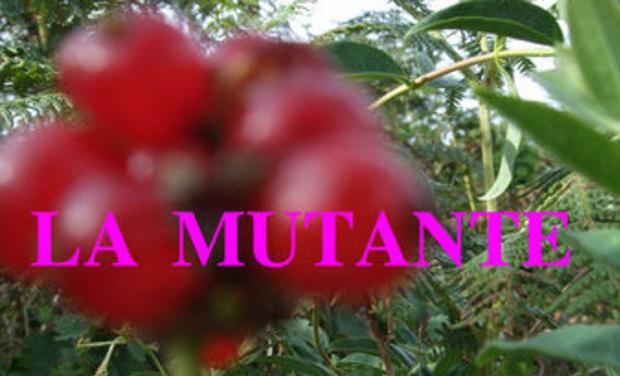 Large_la_mutante