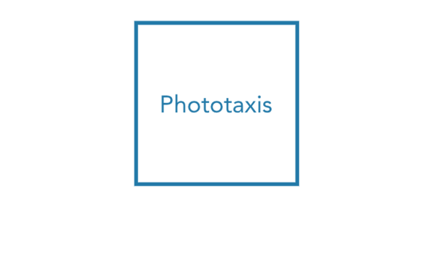 Project visual Financez l'Exposition PHOTOTAXIS