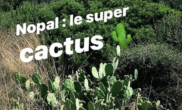 Project visual NOPAL : le super-cactus en cuisine et en COSMETIQUE
