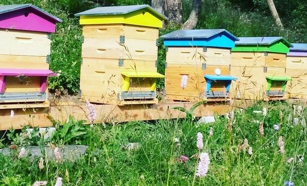 Visuel du projet Un rucher pour un projet de vie