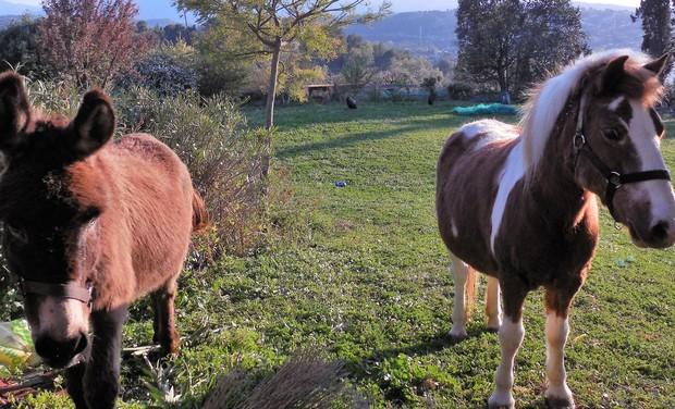 Visuel du projet De la production de légumes locale et naturelle sur Grasse, ça vous intéresse?