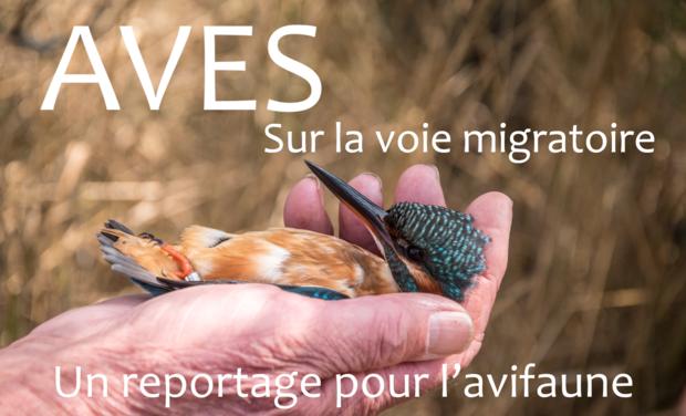 Visuel du projet Sur la voie migratoire, un reportage pour l'avifaune