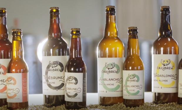 Project visual Microbrasserie Caribrew : Des bières créées pour vous !