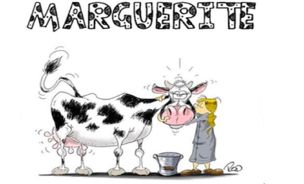 """Project visual Film """"MARGUERITE"""" au profit de Télévie"""