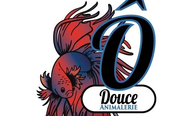 Project visual Ô douce : 1er magasin d'aquariophilie à Toulouse