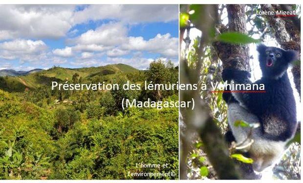 Visuel du projet Préservation des lémuriens à Vohimana (Madagascar)