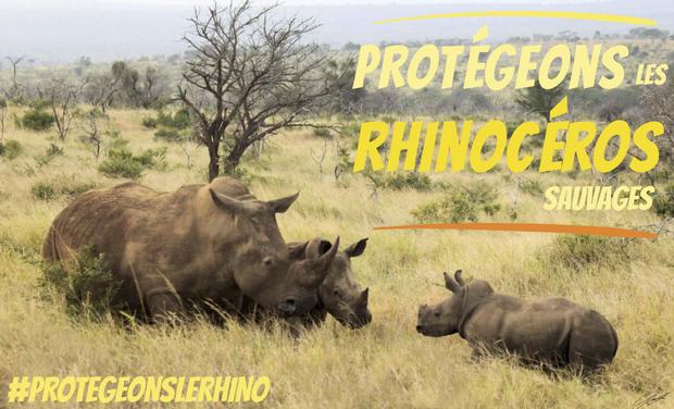 Project visual Sauvez les Rhinocéros noirs