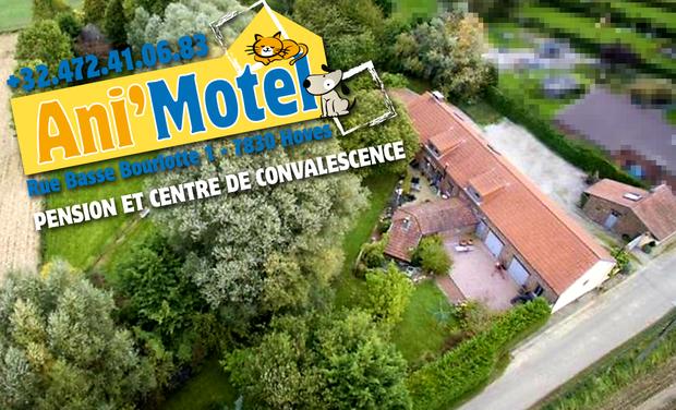 Visuel du projet Ani'Motel : une pension et un centre de convalescence pour chiens et chats