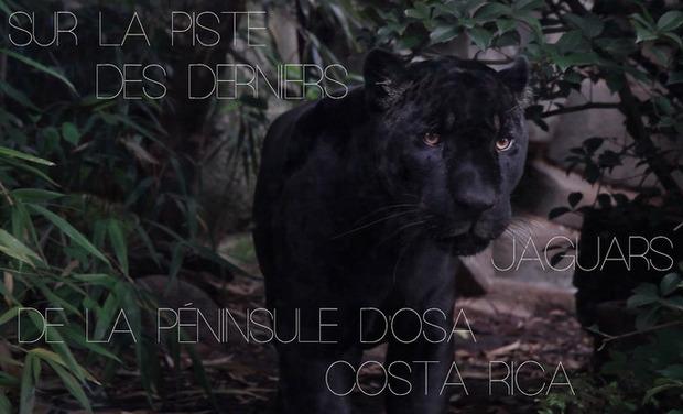 Large_sur_la_piste_du_jaguar