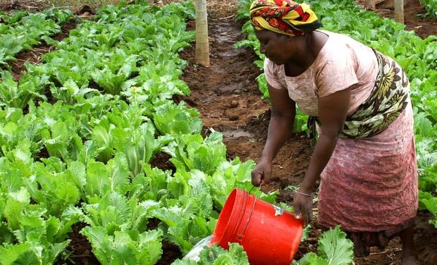 Visueel van project Maadvert, participez à l'agriculture de demain au Togo