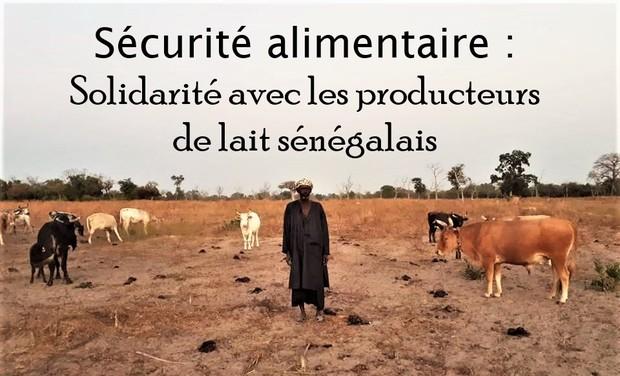Visuel du projet Sécurité alimentaire : Pour une production de lait local sénégalais
