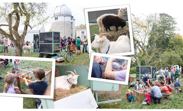 Visuel du projet La collecte continue pour transformer le triporteur piaggio en ferme ambulante