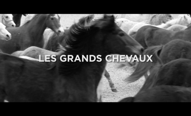 Project visual Les Grands Chevaux