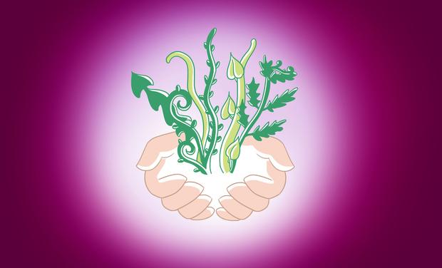 """Visuel du projet Lancement de l'herboristerie """"Simplement"""" partenaire de votre bien-être !"""
