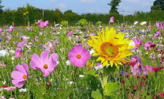 Visueel van project vous voulez des fleurs dans les champs ?