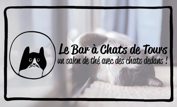 Visuel du projet Le Bar à Chats de Tours
