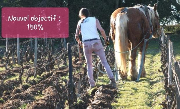 Visuel du projet Retour du cheval dans les vignes