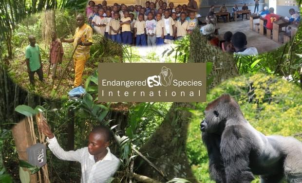Visuel du projet Sauvons les Grands Singes du Congo