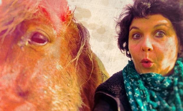 Visuel du projet Equicoaching & Médiation Equine pour tous