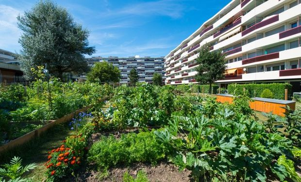 Project visual Potager en ville