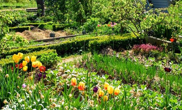 Visuel du projet Création d'un jardin potager en permaculture. Refuge de la biodiversité