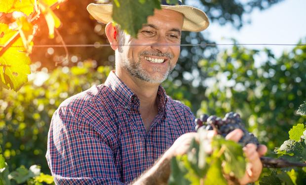 Visuel du projet Occitanic, la première plateforme dédiée aux vignerons !