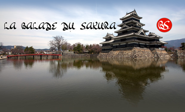 Visuel du projet La balade du Sakura